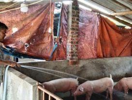 Làm giàu từ chăn nuôi an toàn sinh học