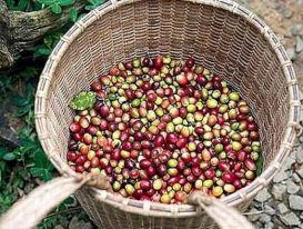 Giá cà phê hôm nay 17/2 (Mùng 6 Tết): Trong nước tăng nhẹ