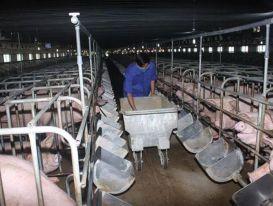 DATC đấu giá cả lô một doanh nghiệp chăn nuôi với giá hơn 20 tỷ